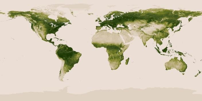 Вся флора Земли