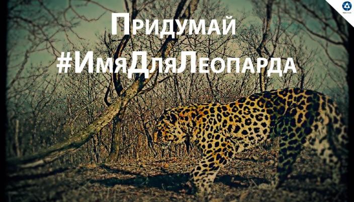 Росатом и леопард