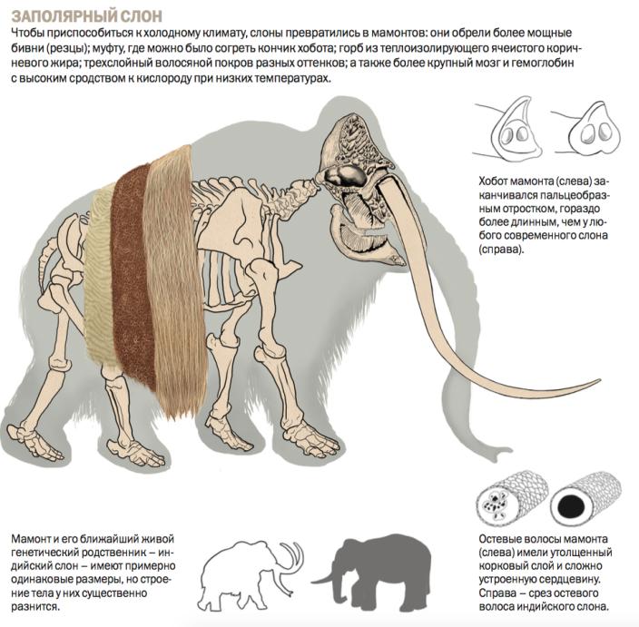 mammothchart