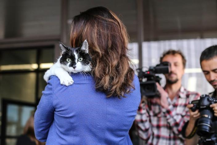 Как коты принесли НГУ больше 100 публикаций в СМИ
